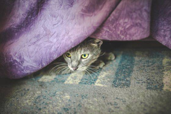 gatto ama nascondersi