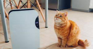 aria condizionata cani gatti