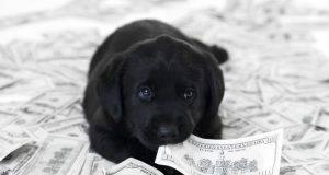 animali azienda cane soldi