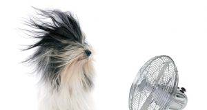 ventilatore cane