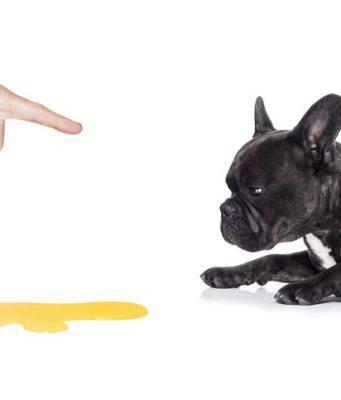 cistite cane