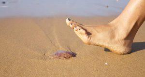 punture animali marini