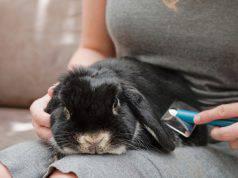 curare pelo coniglio angora