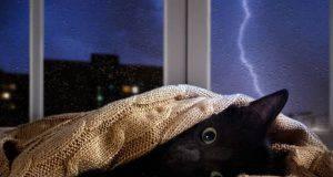gatto paura temporale