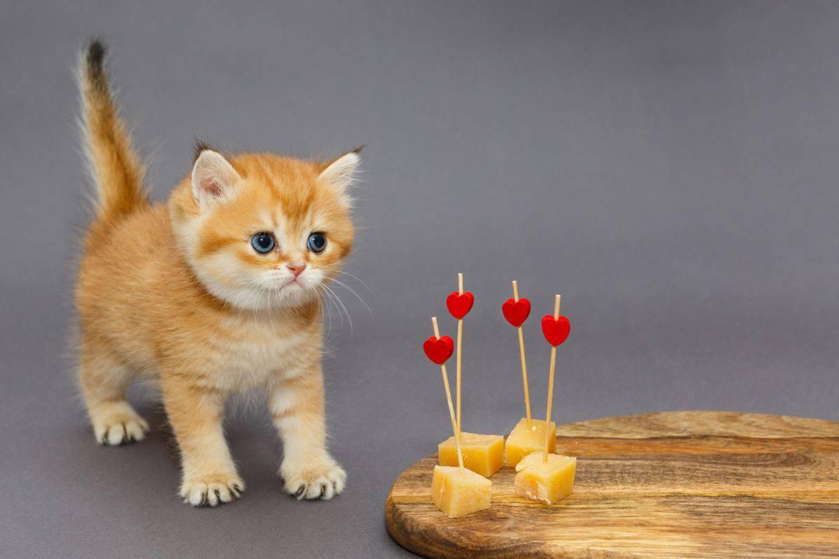 gatto formaggio