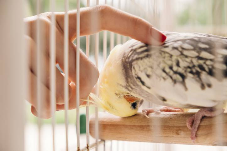 uccelli soffrono il caldo