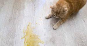 incontinenza gatto