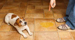 incontinenza cane