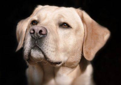 naso cane depigmentazione