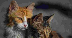 Malattie pelle gatto