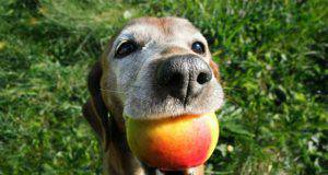 cane mangia mango