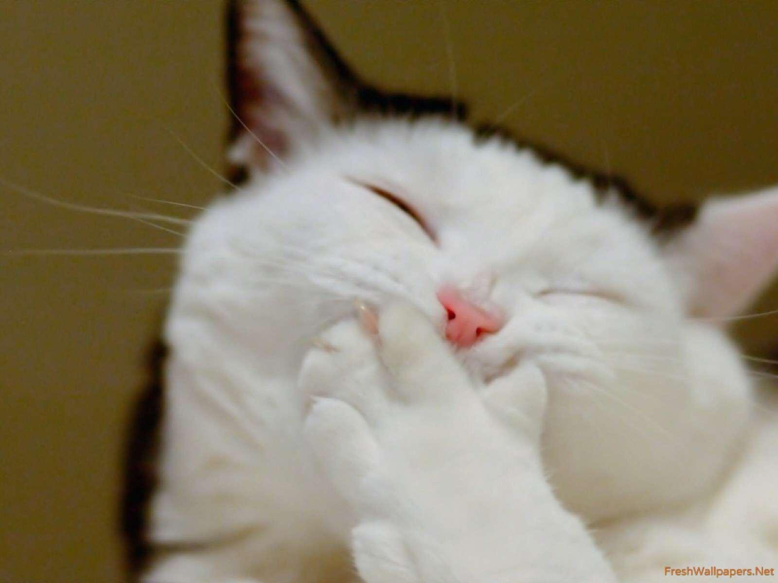 Occhi rossi gatto