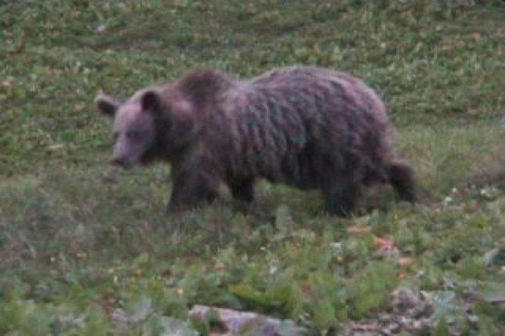 orso ,49 trento