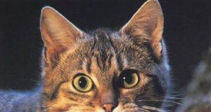 gatto preda a casa