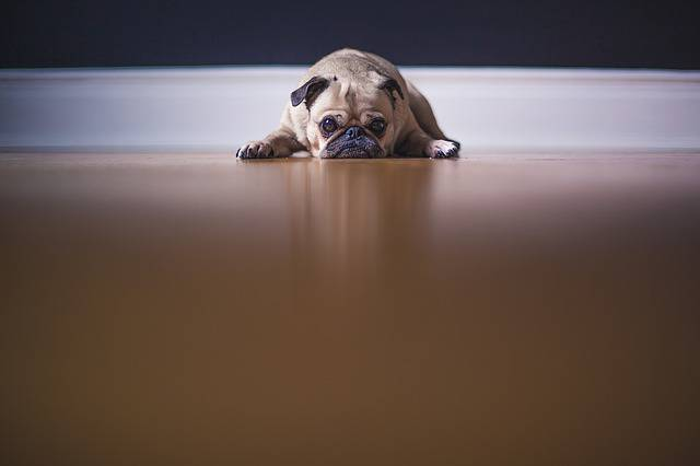cane paura aspirapolvere