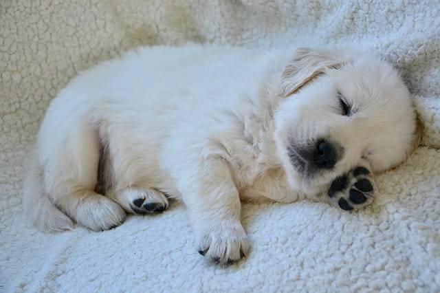 cucciolo di cane che dorme