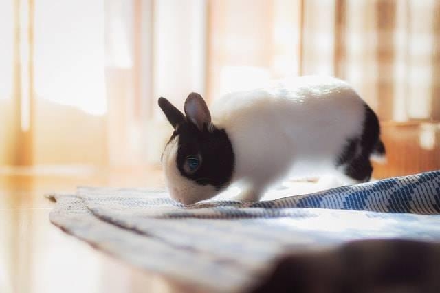 coniglio caldo