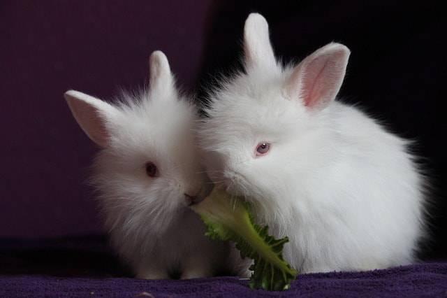 coniglio non mangia
