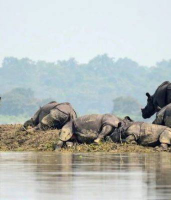 animali alluvioni india