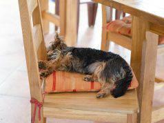 Il cane muove le zampe mentre dorme