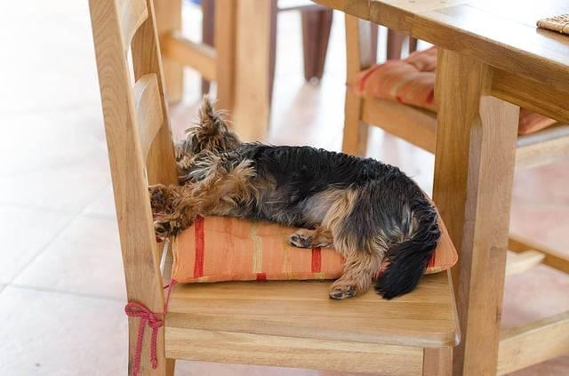 cane muove le zampe mentre dorme