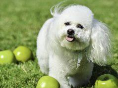 cane mangiare mela