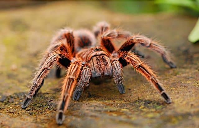 paura dei ragni