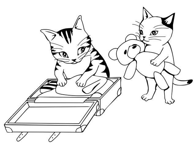 Trasloco con il gatto
