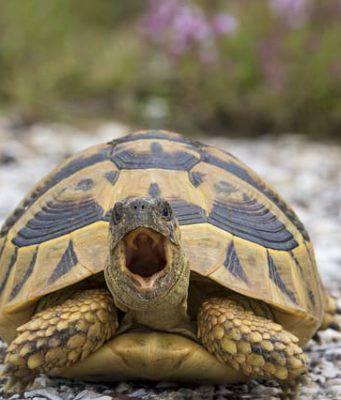 tartarughe caldo estate