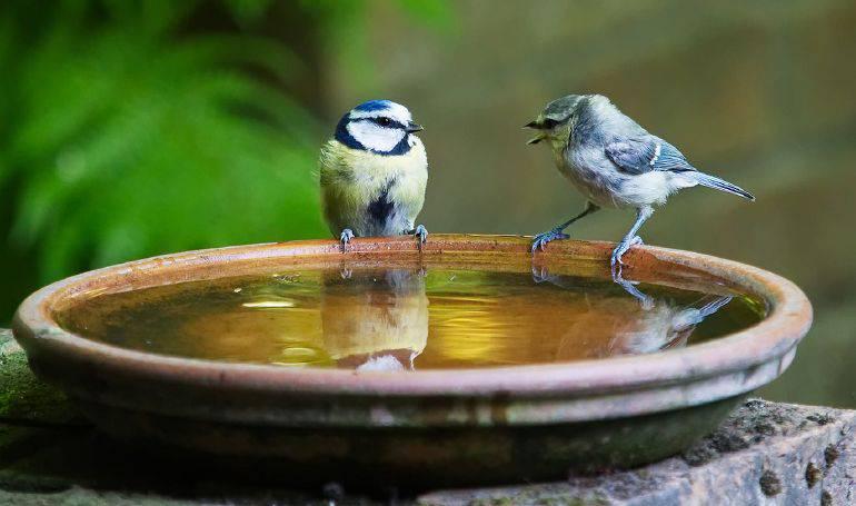 uccellini acqua