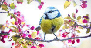 Quanto vivono gli uccelli?