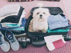 vacanze con animali