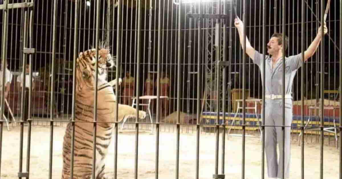 domatore ucciso da tigri