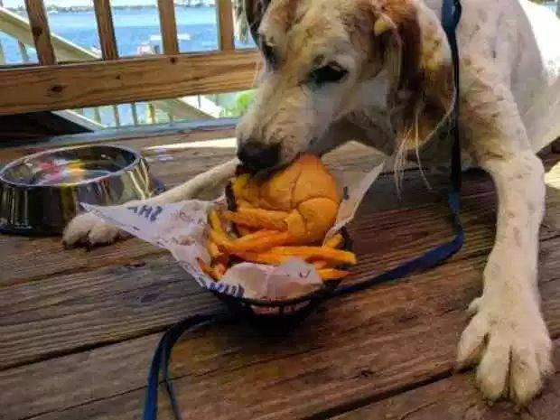 dire addio al cane