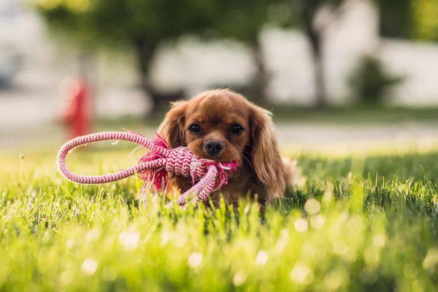 cura denti cucciolo cane