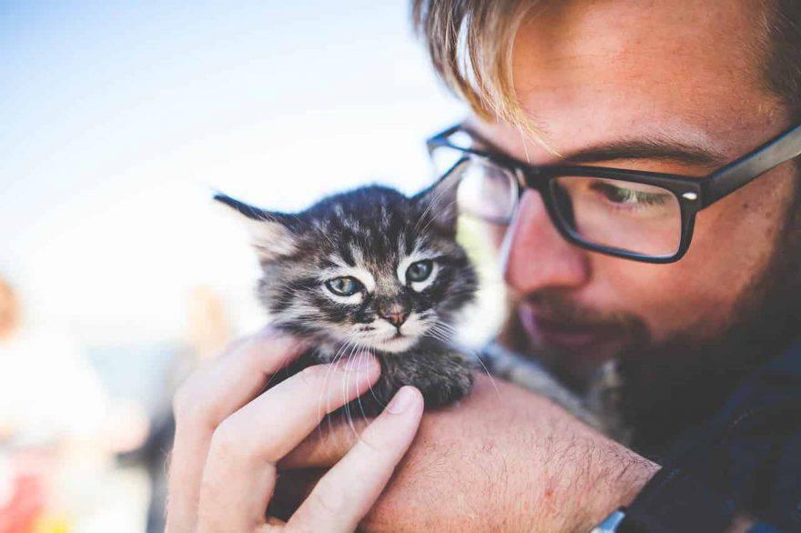 aiutare gattino