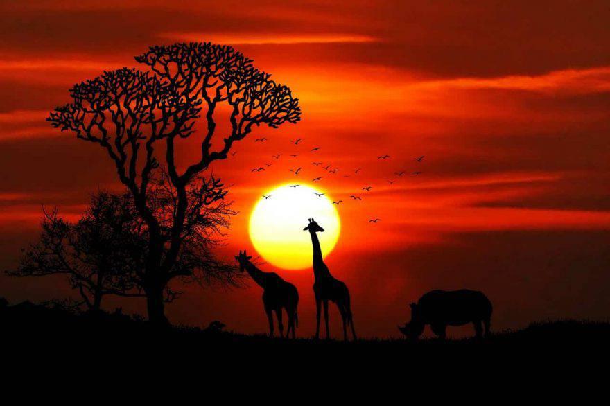 animali savana africa