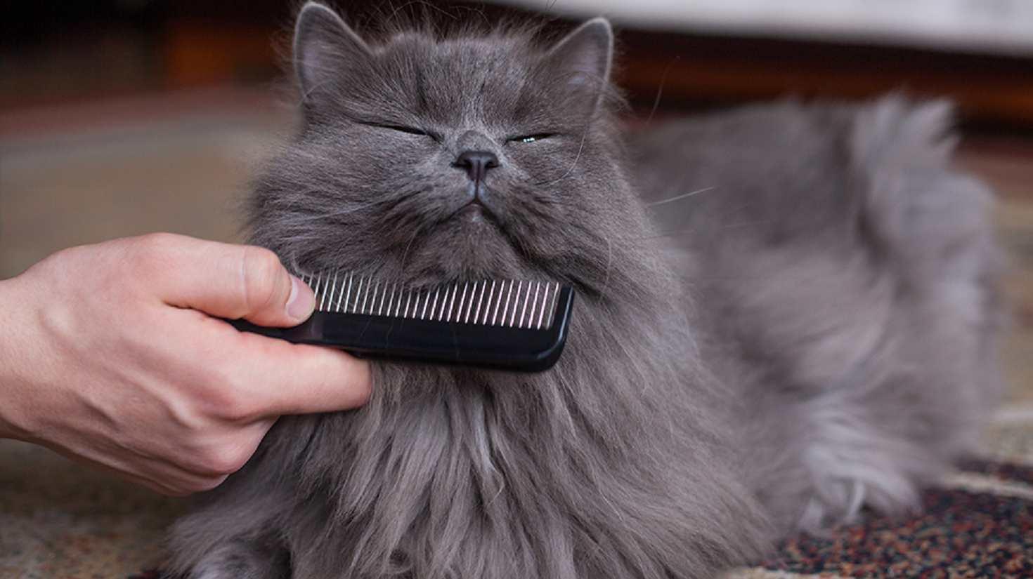 rimuovere ammassi gatto pelo lungo