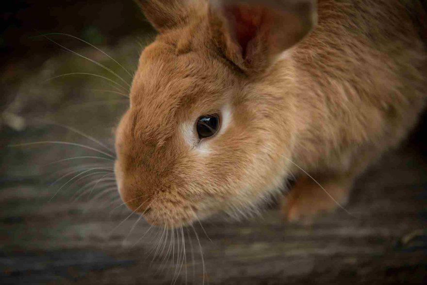 Casa sicura per il coniglio
