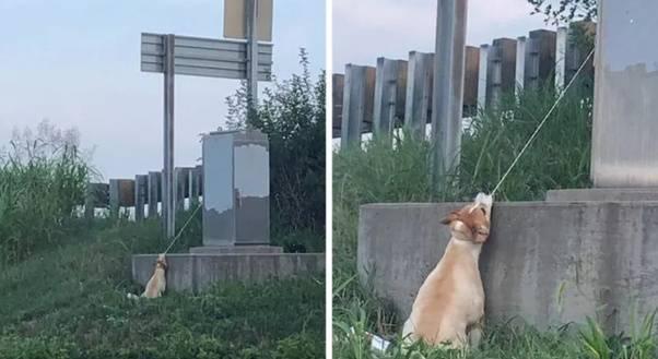 cane legato autostrada