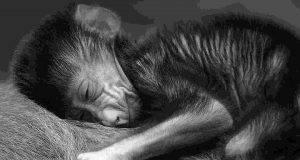 Animali più empatici