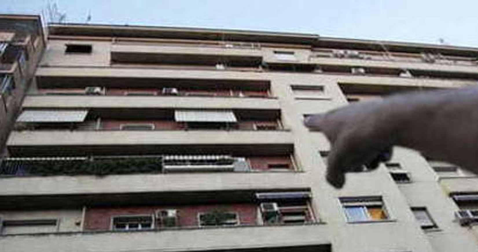 Cane cade dal balcone
