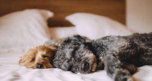 convivenza cucciolo cane anziano