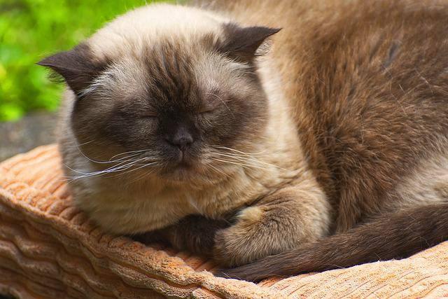 sintomi urinari del gatto
