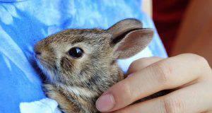 feci del coniglio