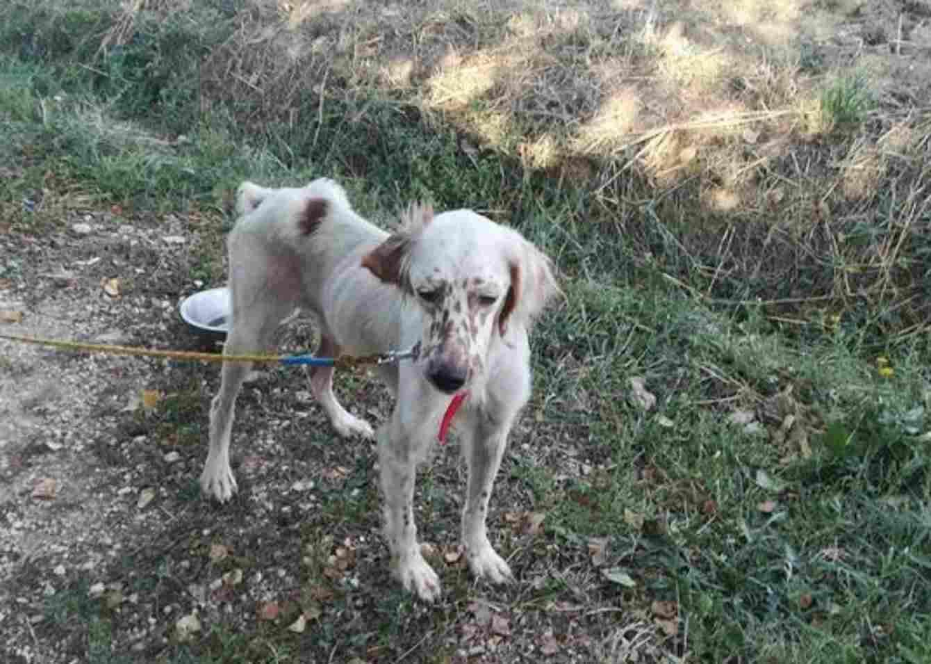 cane abbandonato canile