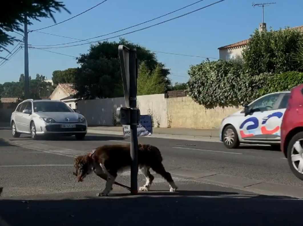 abbandono cani soccorso