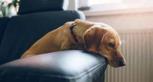 psicofarmaci per il cane