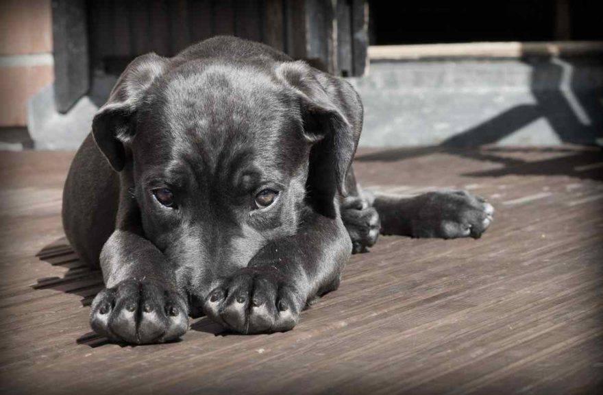il cane zoppica (Pixabay)