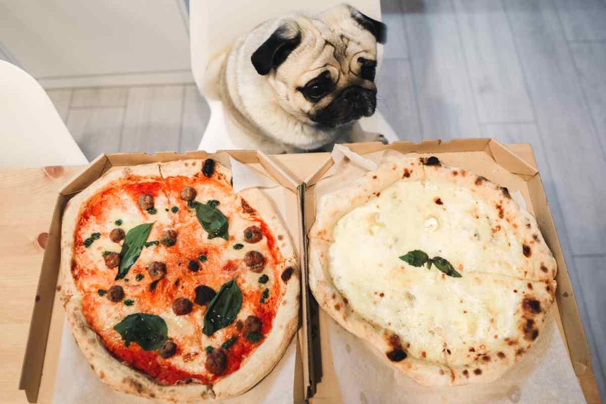 Il cane può mangiare la pizza? (foto iStock)